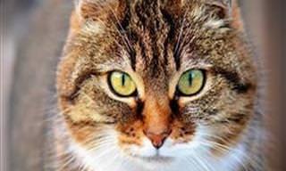 Qual seria a sua personalidade <b>de</b> <b>gato</b>? Descubra!